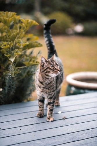 Comment apprendre à son chat à ne pas fuir ?