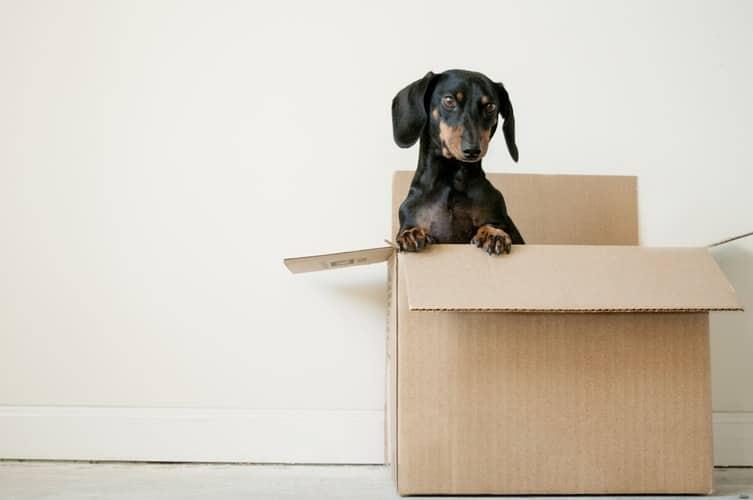 Comment déménager en toute sérénité avec son animal de compagnie ?